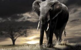 Картинка закат, природа, слон