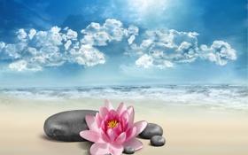 Обои море, цветок, небо, природа, камни, лотос, Lotus