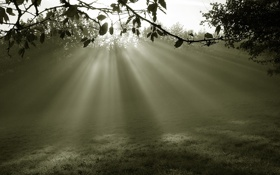 Обои лучи, свет, природа, поляна, утро