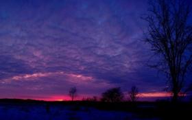 Картинка закат, облака, небо, вечер, дерево, Природа, кусты