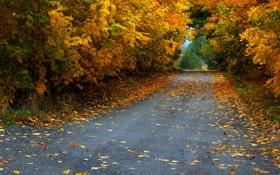 Картинка листья, деревья, осень, листва, дорога