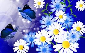 Картинка цветы, коллаж, бабочка, ромашки