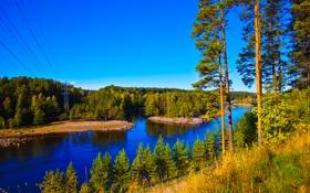 Обои осень, лес, небо, деревья, природа, река, провода