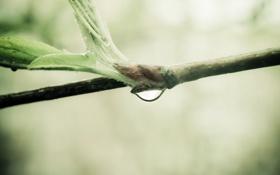 Обои макро, природа, росток, ветка, nature, macro, 2560x1600