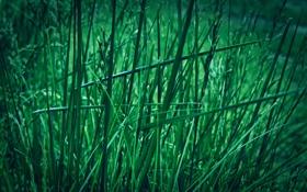 Обои зелень, трава, макро, природа, green, grass, macro