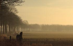 Картинка пейзаж, природа, конь, вечер