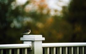 Картинка фон, птица, забор