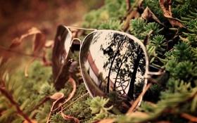 Картинка лес, стекло, отражение, очки
