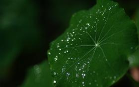 Обои капли, зеленый, лист, роса