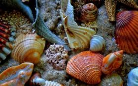 Картинка песок, море, дно, раковина, ракушки