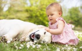 Картинка поле, природа, ромашки, собака, платье, розовое, девочка