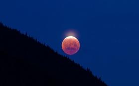 Картинка лес, небо, Луна, склон
