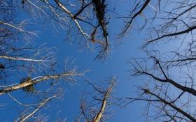 Обои пейзаж, небо, деревья
