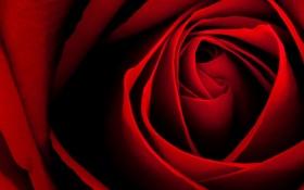 Обои цветок, макро, роза, лепестки, бутон, красная