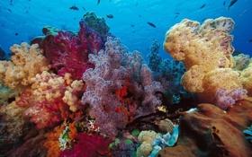 Картинка рыбы, жизнь, цвет, deep, ocean, life, морское дно