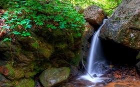 Картинка лес, деревья, ручей, камни, водопад