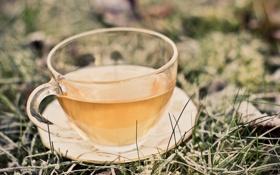 Картинка трава, чай, кружка, напиток, блюдце