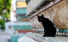 Обои кот, город, улица, черный, здание, рельеф