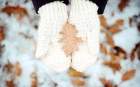 Картинка зима, лист, руки