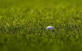 Картинка белый, трава, макро, спорт, фокус, мячи, зелёный