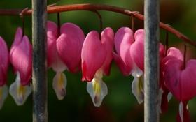 Обои забор, ветка, прутья, цветущая