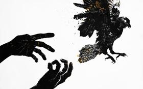 Обои птица, полёт, руки