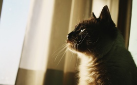 Картинка кот, шерсть, кошка, усы