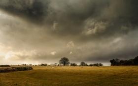 Обои горизонт, деревья, овцы, поле, буря, ферма, серые облака