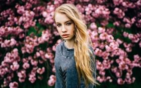 Картинка Linda, portrait, Bloomy Dreams