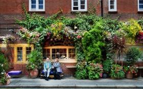 Обои windows, white, flowers, people, plants, sidewalk, building bricks