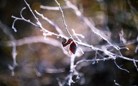 Картинка листья, ветка, размытость