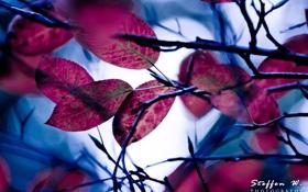 Обои листва, ветка, moonlight