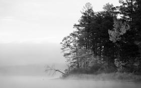 Обои зима, лес, елки
