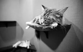 Картинка кот, стена, сон, коты, © Ben Torode