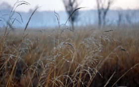 Обои в поле, тоненькие, травинки, туманное утро., роса