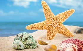 Обои песок, ракушки, пляж, морские ракушки, лето