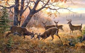 Обои осень, животные, пасмурно, ситуация, живопись, олени, поединок