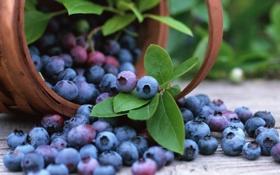 Обои черника, корзина, fruits, blueberry