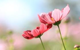 Обои стебель, растение, лепестки, цветы