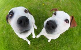 Обои собаки, трава, макро