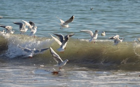 Картинка море, птицы, волна, чайка