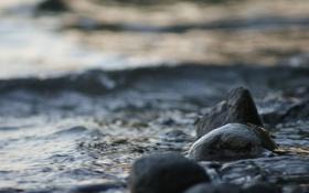 Картинка камни, рябь, вода, море, берег, ветер, природа