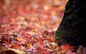 Обои макро, природа, листва, мох, ствол