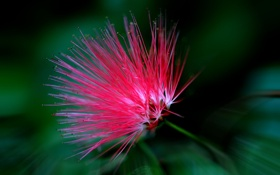 Картинка цветок, природа, растение, лепестки, экзотика