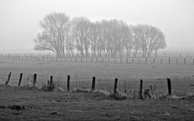 Обои фото, view, fog, обои, деревья, туман, природа