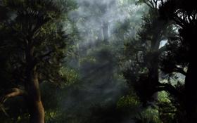 Обои лес, лучи, свет, деревья, рассвет, хвойный
