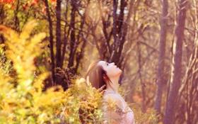 Картинка лес, девушка, природа, вверх, голова, смотрит, боке