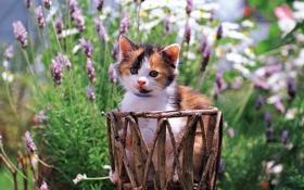 Обои кошка, кот, цветы, котенок, киска, киса, cat