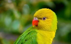 Картинка птица, попугай, клюв, перья