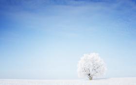 Картинка трава, снег, дерево